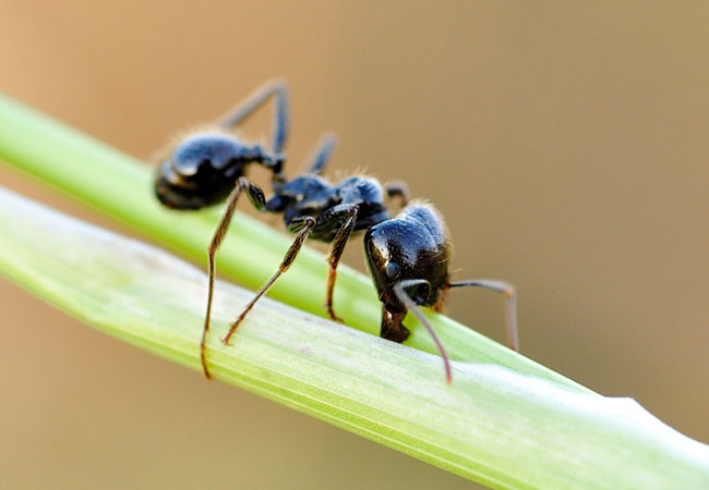 animal omnivoro hormiga