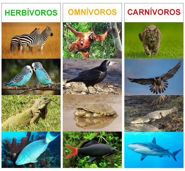 animales carnívoros, herbívoros y omnívoros