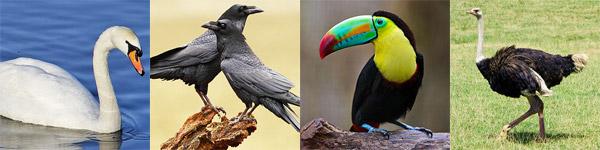 aves omnivoras