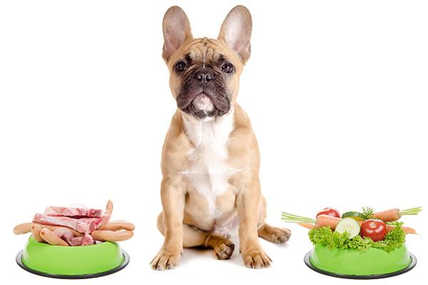 perro carnivoro omnivoro