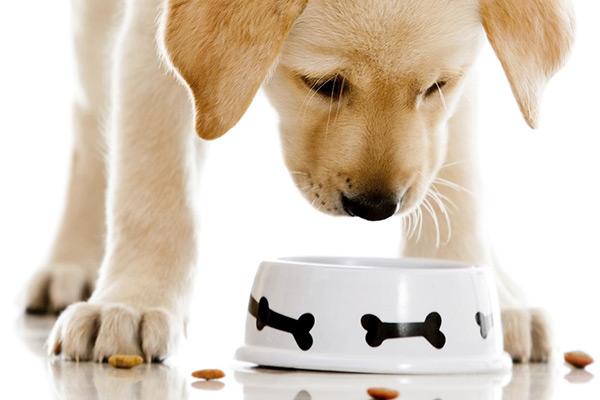 perros omnivoros o carnivoros