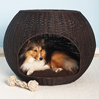 camas perro