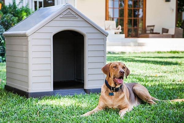 Casetas para perros informaci n til cu l elegir for Casetas para perros aki