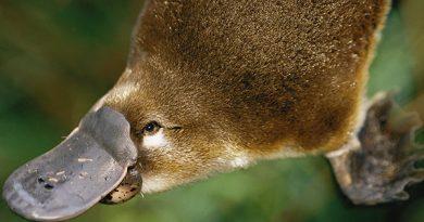 animales omnivoros extraños