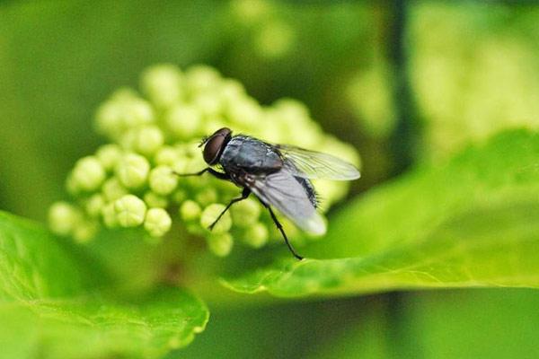 mosca alimentacion