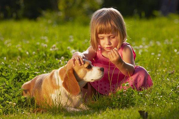 beagle con niños
