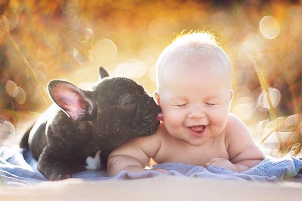 bulldog francés con niños