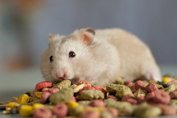 piensos para hamster