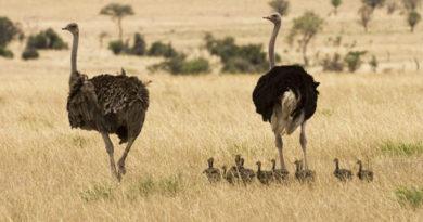 Animales omnivoros de la sabana