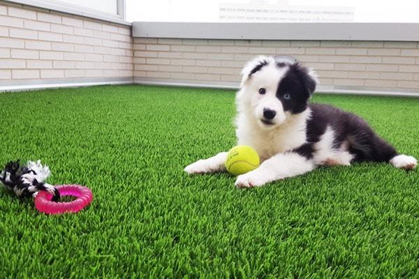pasto sintetico para perros